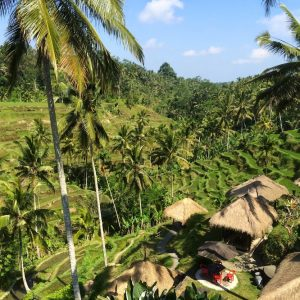 Bali Tours & Activities with 10% off
