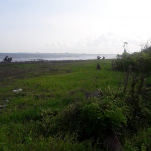 Beach front Land 2100 sqm for sale in Ketewel Beach Bali