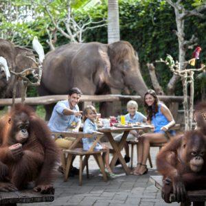 Bali Zoo: Breakfast with the Orangutans