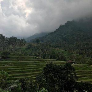 Omunity Bali