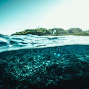 Blue Marlin Bali