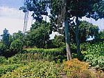 Land for lease 1,000 sqm in Kerobokan Bali
