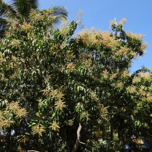 Green Trees for Bali