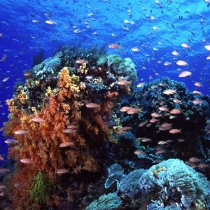 Reef Cruise Day Trip to Nusa Lembongan